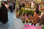 شرکت های تعاونی در حوزه گل و گیاه ۱۱ هزار شغل ایجاد کردند