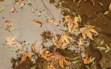 بیسابقهترین و کمسابقهترینهای پاییز ۹۶؛ ۶ استان امسال رکورد کمبارشی را در کشور جابه جا کردند